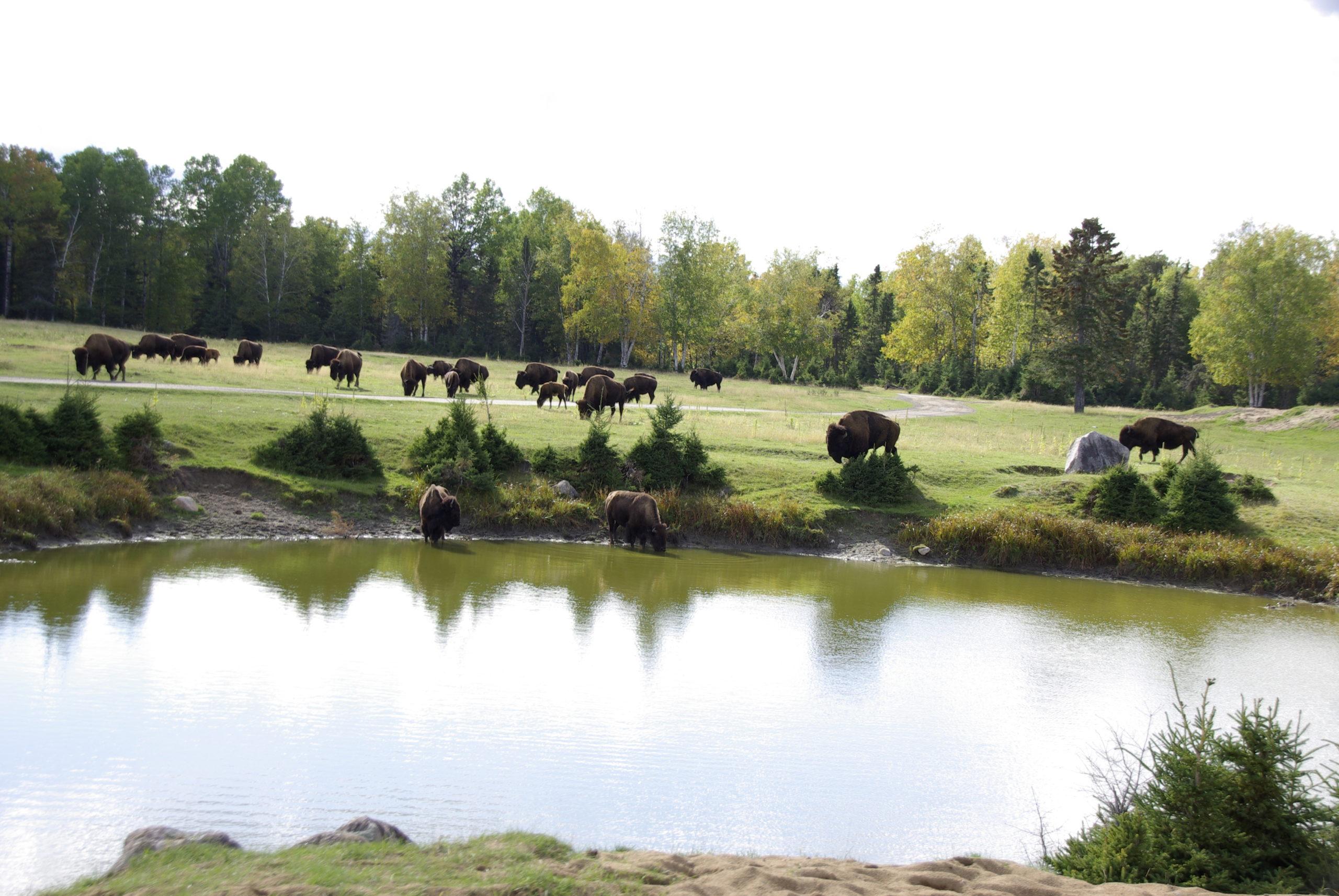 Zoo de St-Felicien